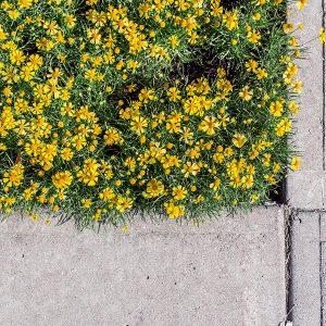 gele bloemen en tegels
